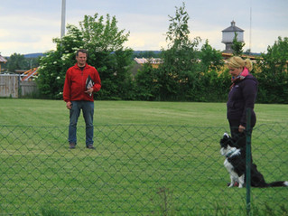 Obedience Prüfung beim ÖRV Donaustadt