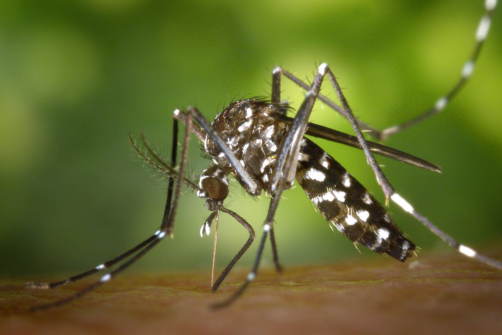 Ballistol contro le zanzare
