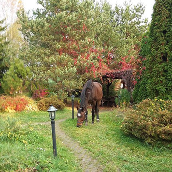 #коньЗапрет в цвете осени
