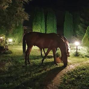 Доброй ночи_._У лошадей начался период а