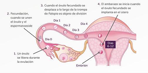 Femsalud/infertilidad
