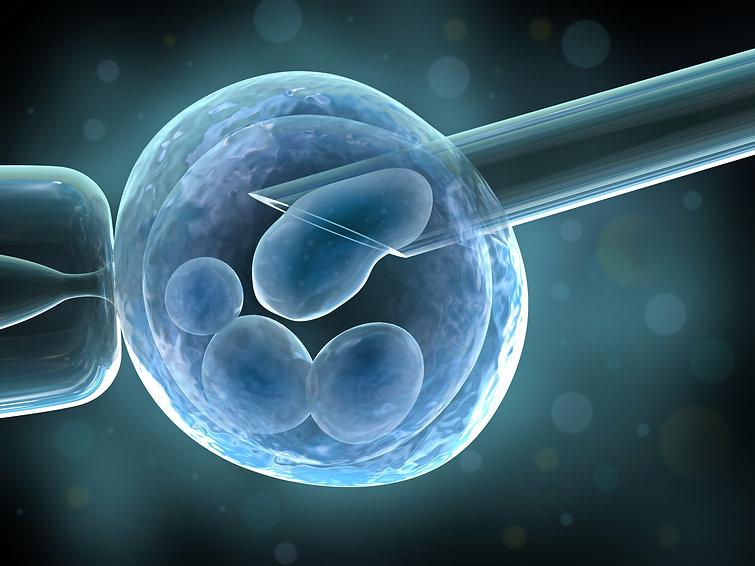 Femsalud/biología de la reproducción humana