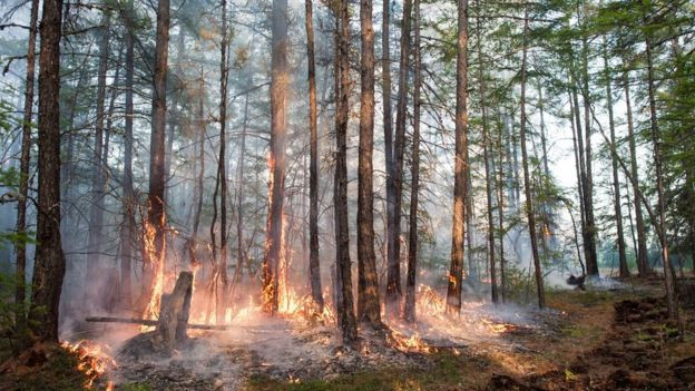 As the Arctic Circle heats up during the summer, heat waves strike across the world. This Russian forest faces a wildfire exacerbated by higher temperatures and strong winds