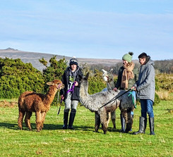 January Alpaca Trekking