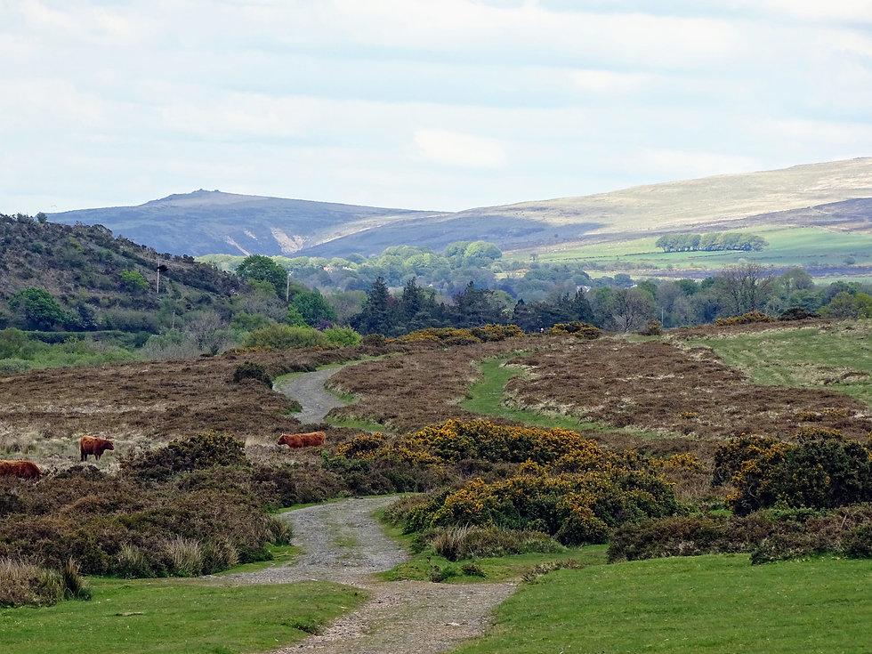 Alpaca Trekking route in Dartmoor National Park