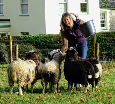 Feeding the woolly sheeps