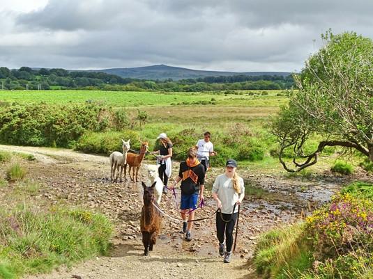 August Alpaca Trekking