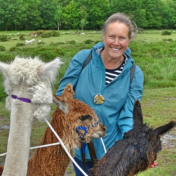 Surounded by pacas!