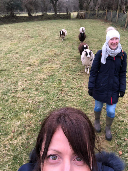 Antics with the sheep on an Animal Encounter
