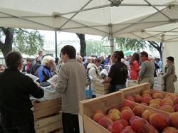 Distribution gratuite de fruits