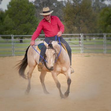 Fear Free Horse Training