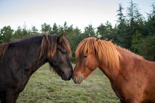 Horses_11.jpg