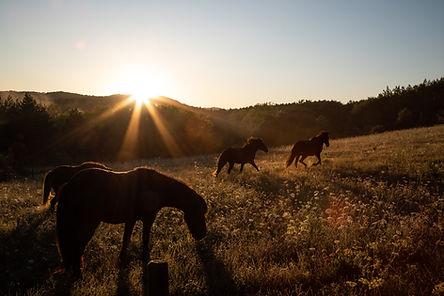 Horses_27.jpg