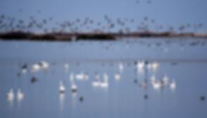 Birds-Orsulakx716[1].jpg