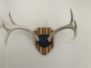 How To Build Your Own Deer Antler Mount