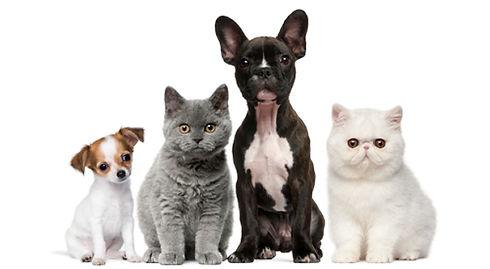 dog, kennel, boarding, pet sitting, pet grooming, findlay ohio