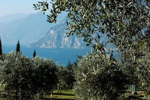 Olivicoltura in Italia
