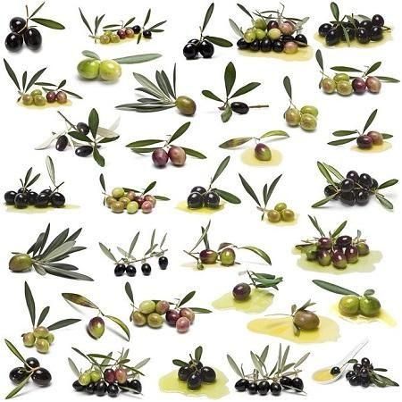 Esempi di cultivar di olivo