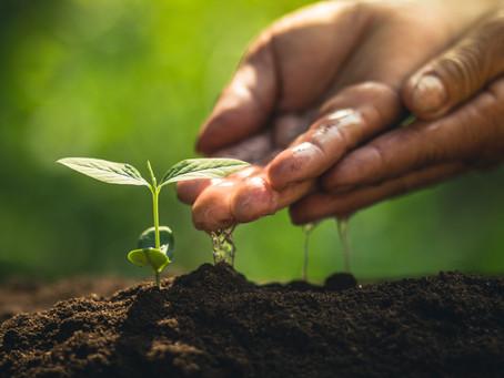 Le fasi fenologiche delle piante e i cambiamenti climatici