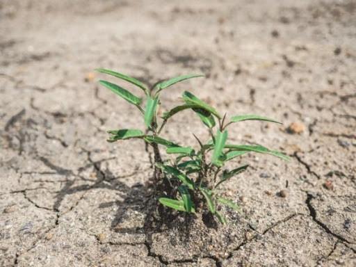 cambiamenti climatici e piante