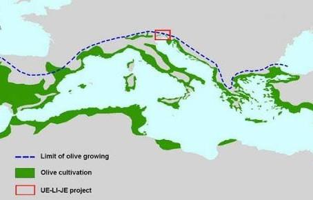 Le cultivar di olivo più diffuse