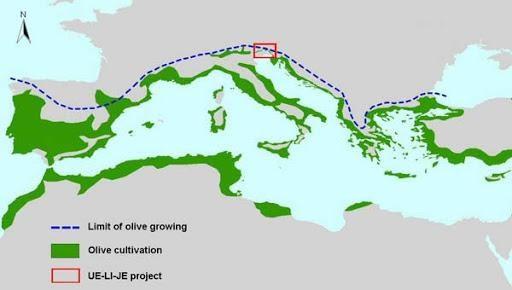 Le cultivar olivo nel mediterraneo
