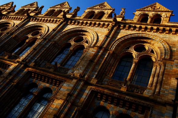 natural-history-museum-london-hamish-bla
