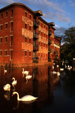 swans-worcester-flood-hamish-blair-photo