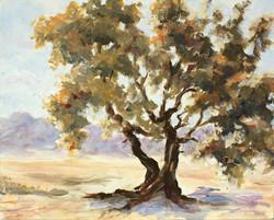 Wilmer Tree 10x8 acrylic