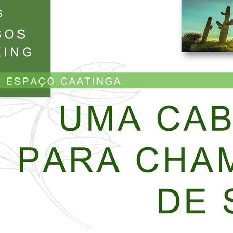 CABINE - ESPAÇO CAATINGA