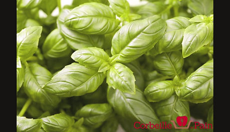 How to beautiful bushy basil?
