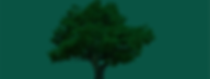 Zone creative tree.png