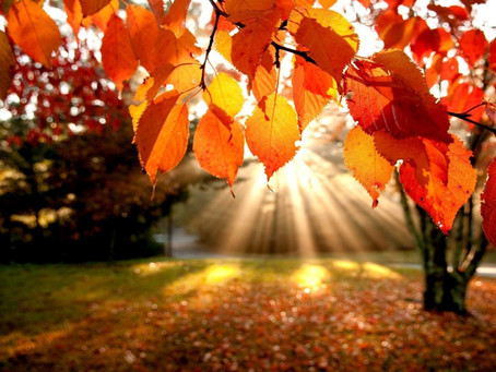 Season of Change: Fall Into Healthy Habits