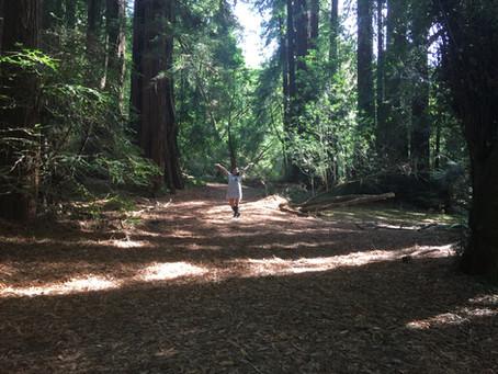 Shinrin-Yoku, The Art of Forest Bathing
