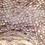 Thumbnail: Striped Gargoyle Gecko  - ID:20CX2M