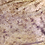 Thumbnail: Moro (Isle E) Leachie - Rhacodactylus leachianus  - ID:20DF1