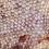 Thumbnail: Striped Gargoyle Gecko - Unsexed - ID: 19GT1