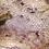 Thumbnail: Orange Striped Gargoyle Gecko  - ID:20DV2M