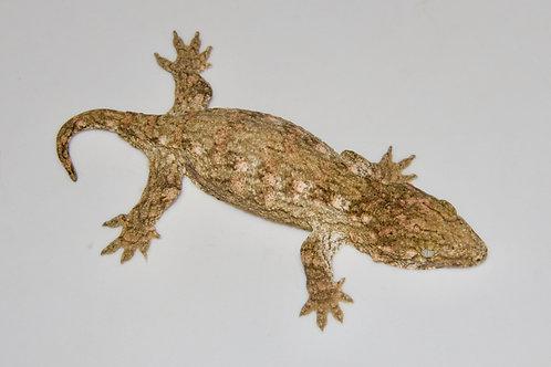 Moro (Isle E) Leachie - Rhacodactylus leachianus  - ID:20DF2