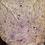 Thumbnail: Striped Gargoyle Gecko - Male - ID:20H2M