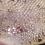 Thumbnail: Striped Gargoyle Gecko  - ID:20H1*