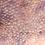 Thumbnail: Dalmatian Crested Gecko ID: 20AM1