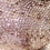 Thumbnail: Striped Gargoyle Gecko: ID: 19FY2