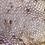 Thumbnail: Striped Gargoyle Gecko - Male - ID: 19FP1M