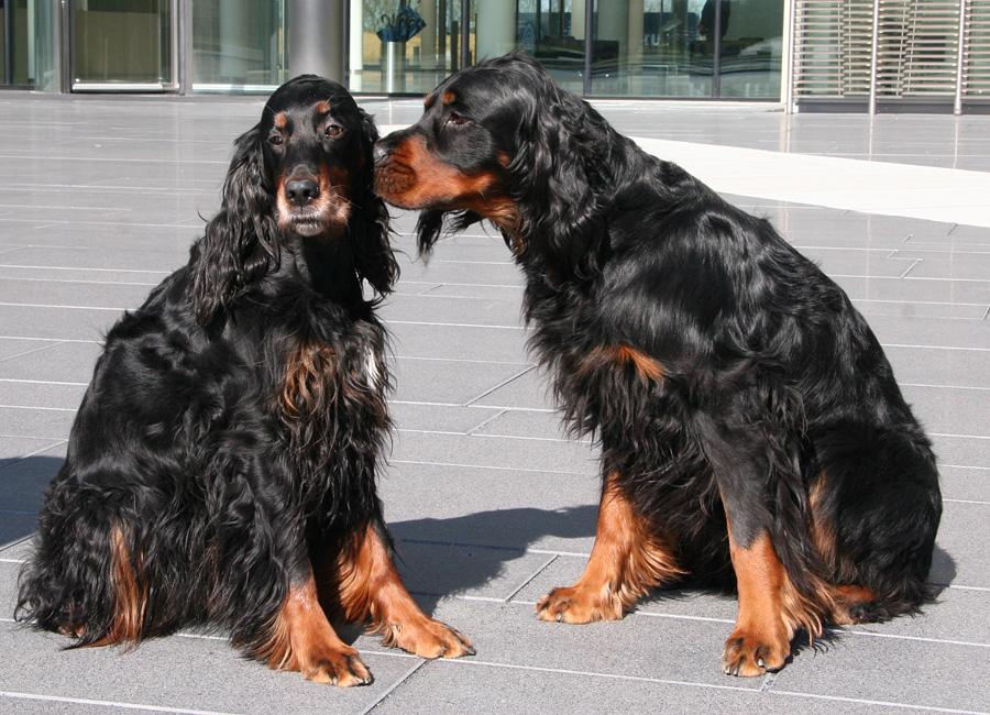 Ostara & Barolo: 19.03.2011