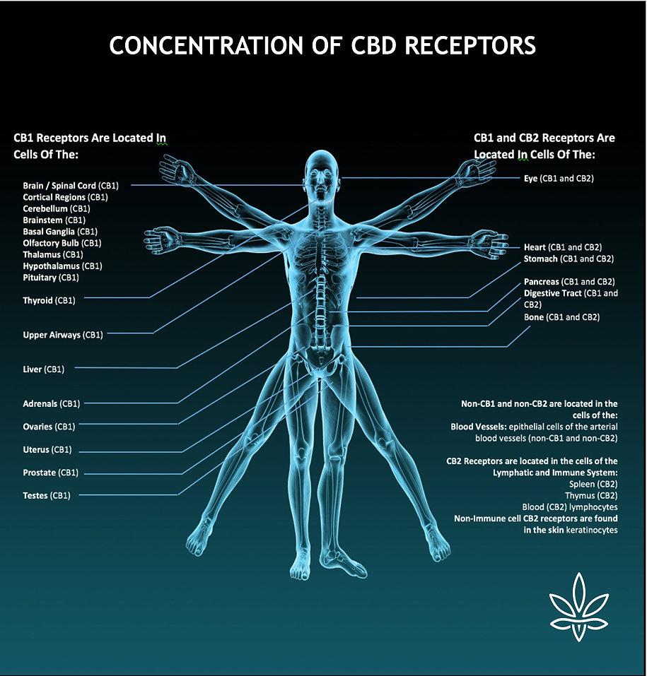 receptors.jpg