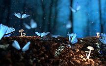 Butterfly night Wallpapers 6.jpg