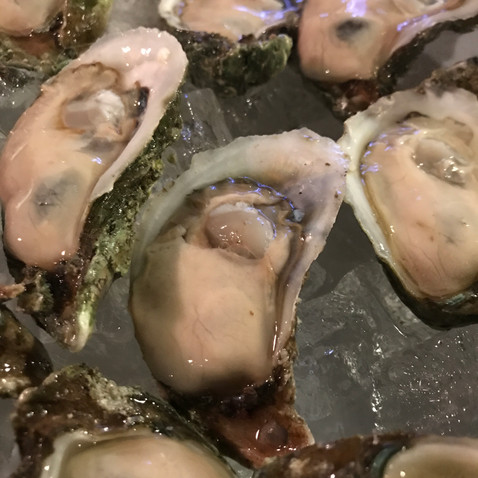 Fresh Oysters from Apalach