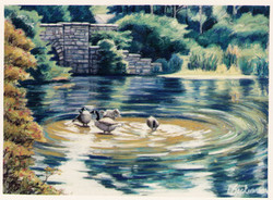 Setauket Pond w Ducks