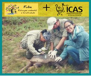 Foto de três pesquisadores com tatu-canastra.  O tatu está deitado sobre uma vegetação rasteira e os pesquisadores estão com as mãos sobre ele. Em cima, aparecem o logo da Fubá e o logo do ICAS) sobre uma faixa amarela. Ao redor da foto, uma moldura verde escuro.